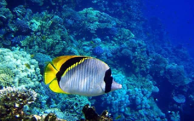 Kroken upp korall fjädrar